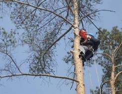 Спилим деревья, раскорчуем участок