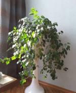 Комнатные растения.