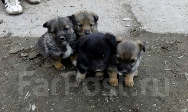 Объявление отдам в хорошие руки маленьких собак работа без опыта в тюмени свежие вакансии
