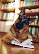 Индивидуальная дрессировка собак