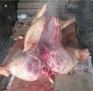 Свинина. Под заказ