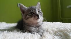 Котенок-малыш ищет семью!