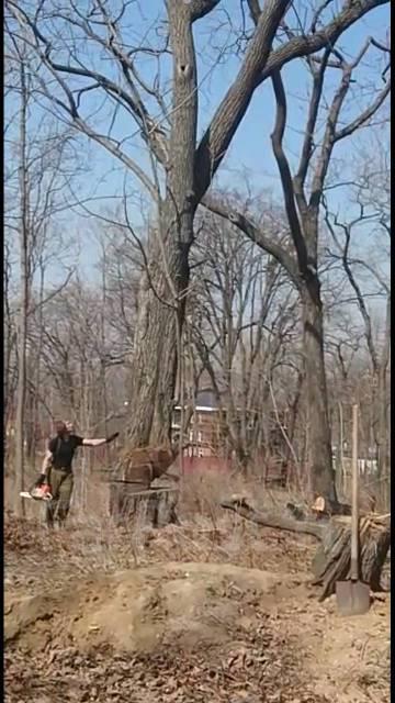 Спилить дерево. Срубить дерево. Санитарная обрезка деревьев. Валка.