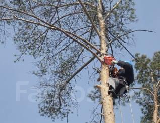 Спил деревьев, спилю деревья, распил деревьев, веток