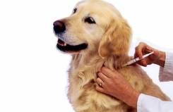 Ветврач-вакцинации с/х и мелких домашних животных