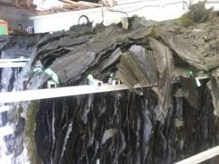 Рабочий. Сушка морской капусты (Тошима) в Корее к 7.05. И.П.Им. Улица Административный Городок 1
