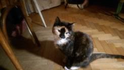Кошка обыкновенная