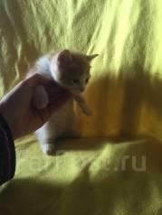 Кошки. Под заказ