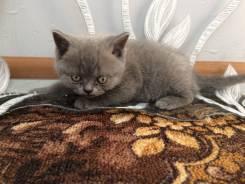 Продам котика