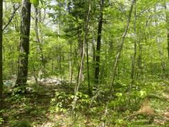 Предлагается к продаже земельный участок р-он Черной речки. 2 000 кв.м., собственность, от агентства недвижимости (посредник). Фото участка