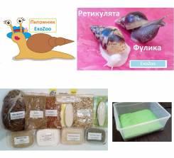 Ахатина Ретикулята, Фулика, корм и товары для улиток