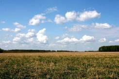 Участок 5 гектар возле трассы М 60. 50 000 кв.м., собственность, электричество, вода, от частного лица (собственник). Фото участка