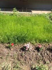 Кошу траву, уборка мусора