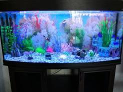 Профессиональное обслуживание, продажа аквариумов. Уход за рыбками.