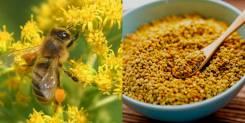 Пыльца пчелиная.