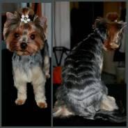 Грумминг для различных пород собак