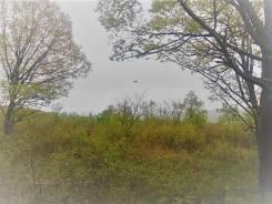 Продам земельный участок в районе Приискового. 2 000 кв.м., собственность, от агентства недвижимости (посредник). Фото участка
