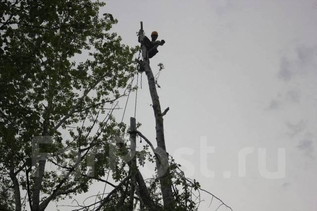 Спил и подрезка деревьев