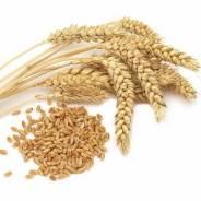Пшеница. Под заказ