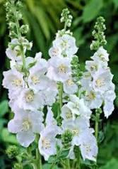 Цветочные, декоративные растения. Под заказ