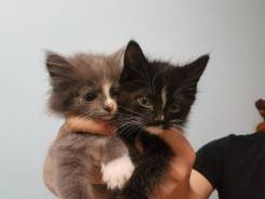 Кошки.