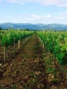 Продам землю с виноградниками.
