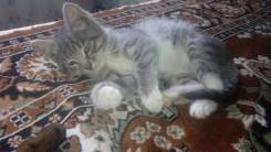 Маленький котенок - девочка