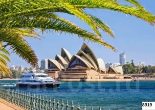 Картина по номерам Сидней(40х50)