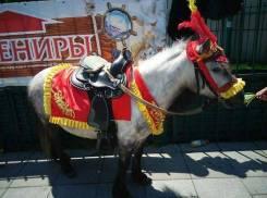 Пони, лошади на детский праздник, фотосессию.