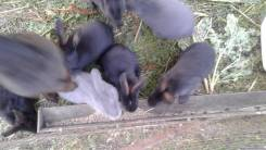 Кролики.