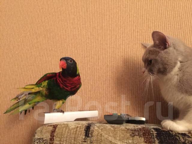 Попугаи Лори.