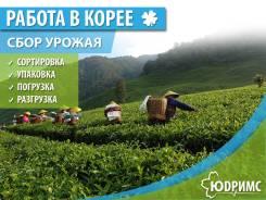 Работа в Южной Корее! Зарплата от 100 000 руб. в месяц!