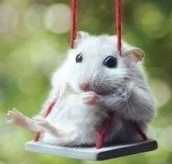 Мыши.