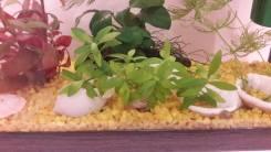Растения.