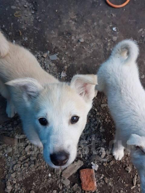 2 месяца щенок лайка фото