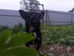 Маленький пес