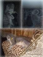 Продаю котят) в Смоляниново