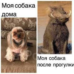 Мытье собак любых размеров и пород.