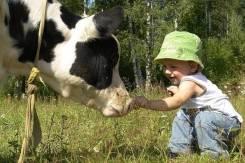 Молоко. Под заказ