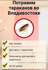 Профессиональное уничтожение тараканов и клопов БЕЗ Запаха