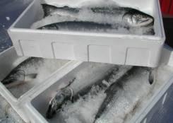 Термоконтейнеры из пенополистирола Поймал рыбу и икру - довези свежей