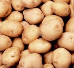 Картофель. Под заказ