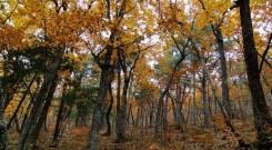 Земельный участок в экологически чистом и живописном районе края. 1 500 кв.м., собственность, от частного лица (собственник)