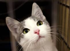 Отдам котенка-мальчика Парабеллума (3,5 мес. )