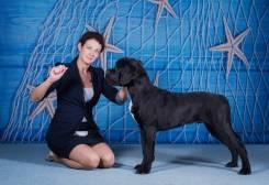 Профессиональный хендлер (демонстрация собак на выставках)