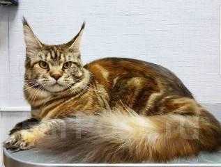 "Груминг кошек- зоосалон ""Маэстро Грум"""