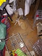 Котята ищут хозяев!