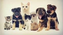 Ветеринарный врач выезд на дом