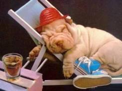 Передержка собак на время отпуска в домашних условиях.
