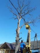 Пилим, валим деревья любой сложности
